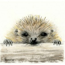 Hedgehog - Art Print