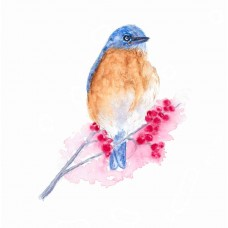 Eastern Bluebird - Art Print