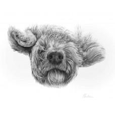 Fluffy - Art Print