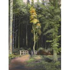 Kelty Woods - Art Print