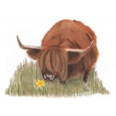 Highland Cow At Applecross - Art Print