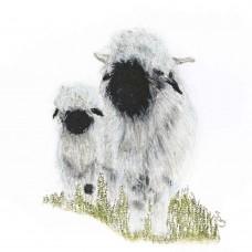 Springfield Farm Valais Blacknose - Art Print