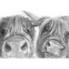 Two Coos - Art Print