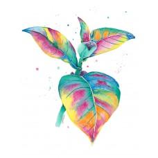 Splash Of Colour - Art Print